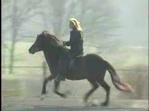 Aegidienberger Tölt Horse