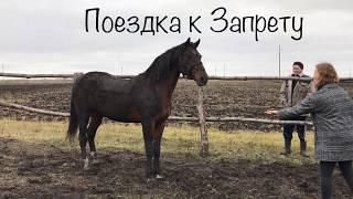 ВСТРЕЧА СПУСТЯ 2 ГОДА. любимый конь (субтитры)