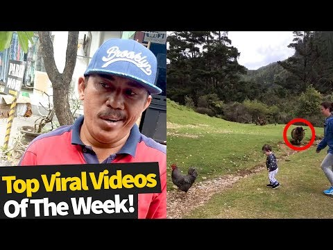 Top 50 Best Viral Videos Of The Month So Far (November 2019 – Wk1)