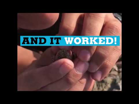 Iran: Forest ranger saves lizard with mouth-to-mouth resuscitation