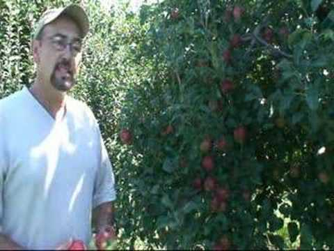 Shihata Apple Orchard, Crafts & Festival