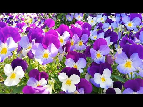 Beautiful flowers in the world with name--Les plus  belles fleurs du monde avec leurs noms