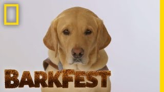 Smart Dog Profile: Kyle | BarkFest