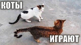 Коты играют в трубе) Котик Артик и Беркут - Игра - Приколы с котами Very funny cats