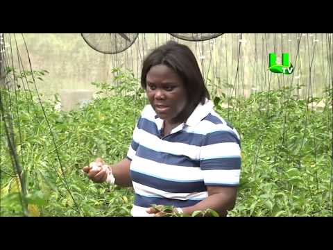 AYEKOO:   Greenhouse Farming in Ghana for Beginners