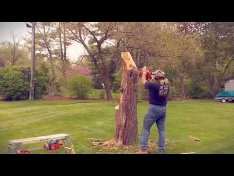 Tree stump carvings chainsaw sculptures over metres high the