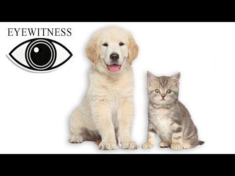 EYEWITNESS   Pets   Full Documentary