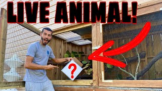 UNBOXING *NEW* REPTILE! DIY ENCLOSURE On RANCH!