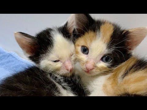 Котята плакали до хрипоты за 20 сентября