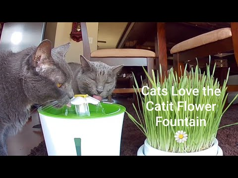 Cats Love the Catit Flower Fountain