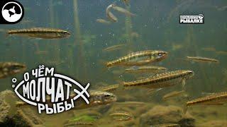 Обитатели горных рек | О чем молчат рыбы