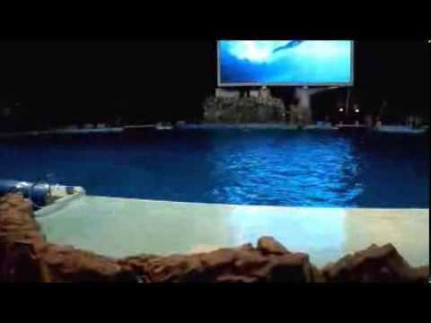 Nagoya port aquarium  名古屋港水族館ナイトパフォーマンス