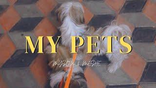 My second shih tzu   myson & meshe   Female shih tzu   vlog 12