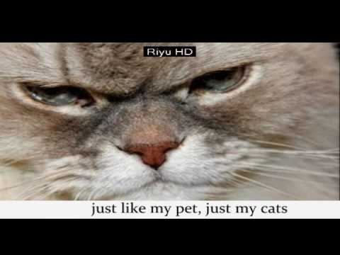 more funny cats picture | hahaha try to not laugh