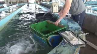 Die Fischzucht in Griechenland