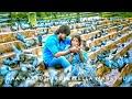 naa kaayuthiruve song for whatsapp status | kariya 2 |