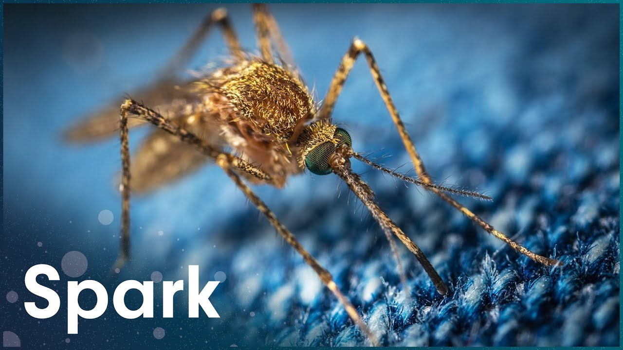 Why Mosquitos Are The Most Dangerous Creatures In The World | Zapped | Spark