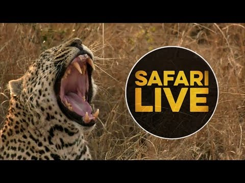 safariLIVE - Sunset Safari - August 10, 2018 - Part 2