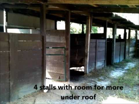 Ocala Florida Mini Horse Farm For Sale Owner Finance