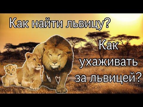 |LEO| 🦁Как найти львицу?/Как ухаживать за львицей?🦁 Ultimate Lion Simulator 2