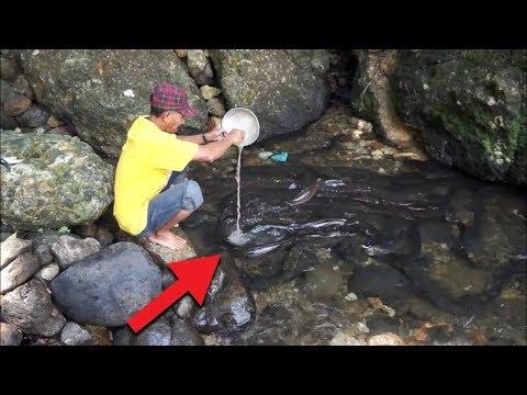 Para Turis Terkejut!! Saat Pria ini Di Sungai, Tiba² Muncul Ratusan Sosok Belut Raksasa!! WOW!!