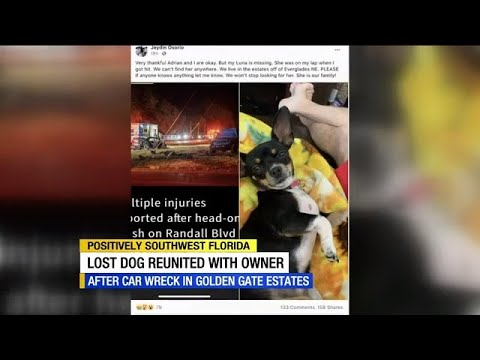 Social media helps reunite family with dog they lost in head-on Golden Gate Estates crash