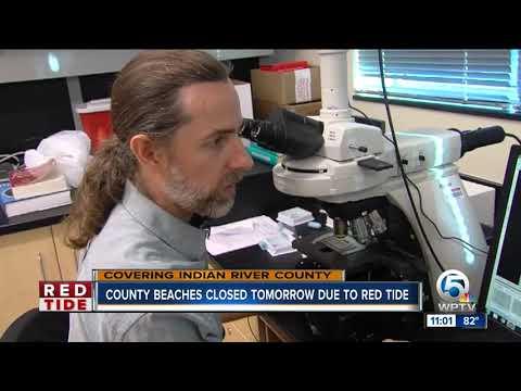 Researchers, FWC find high levels of red tide in Vero Beach