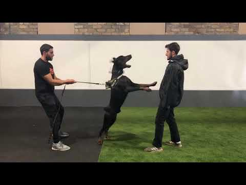 milano-family-protection-dogs-training---protection-dogs-worldwide