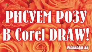 Corel DRAW. Как нарисовать цветок, если у тебя