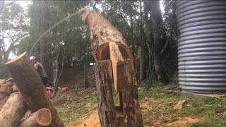 Awesome tree Felling technique