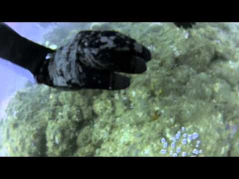 Cook Island Scuba dive - with colour correction