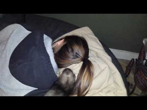 Adorable Ferret Wakes Up Girl  - She Freaks Out
