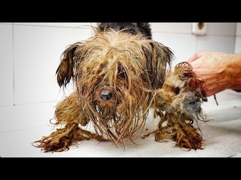 download AMAZING! This dog spent his entire life inside a dark box ... we had to save him !