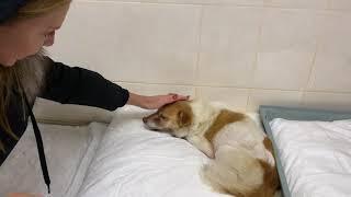 Оксана Марченко забрала слепую собаку из приюта