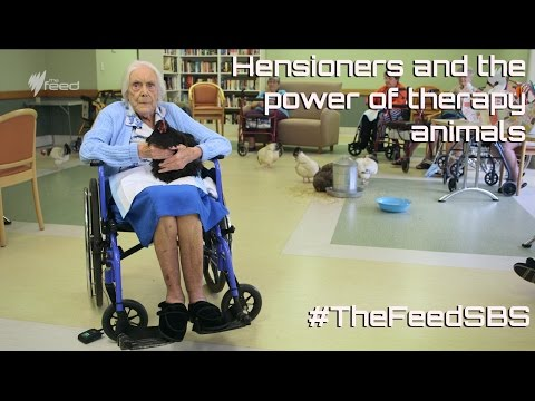 The Hensioners - The Feed