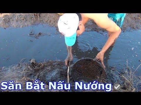 Một hang cá rô đủ BỮA CƠM CHIỀU | SBNN miền tây 247
