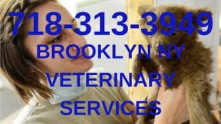 Midwood 11230 Area Urgent Vet Clinic 718-313-3949 Find 24-Hour Brooklyn Veterinary Service Near Me