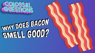 Why Does Bacon Smell So Good? | COLOSSAL QUESTIONS