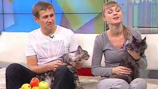 Порода кошек: мейн-кун(Необычные кошки в программе