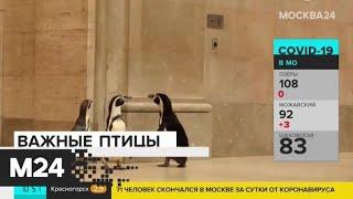 Американский зоопарк устроил пингвинам экскурсию в Музей искусств - Москва 24