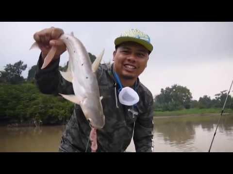 Sisek Vlog - Fishing for Catfish (pangasius)