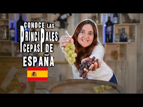 principales-cepas-de-los-vinos-de-espaÑa