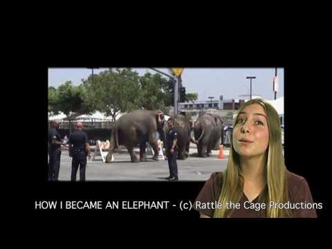 •· Streaming Online How I Became An Elephant