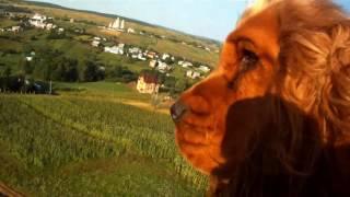 Летающая собака / Flying dog