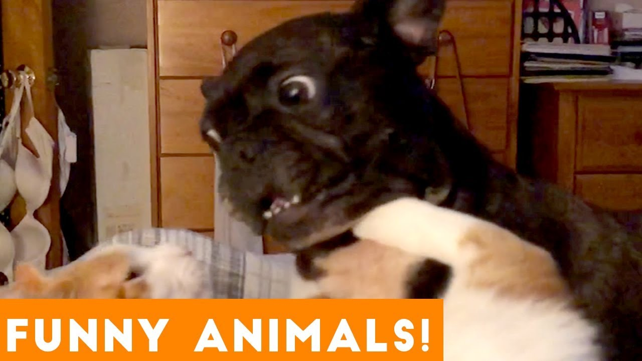 Funniest Pets & Animals of the Week Compilation January 2019   Funny Pet Videos