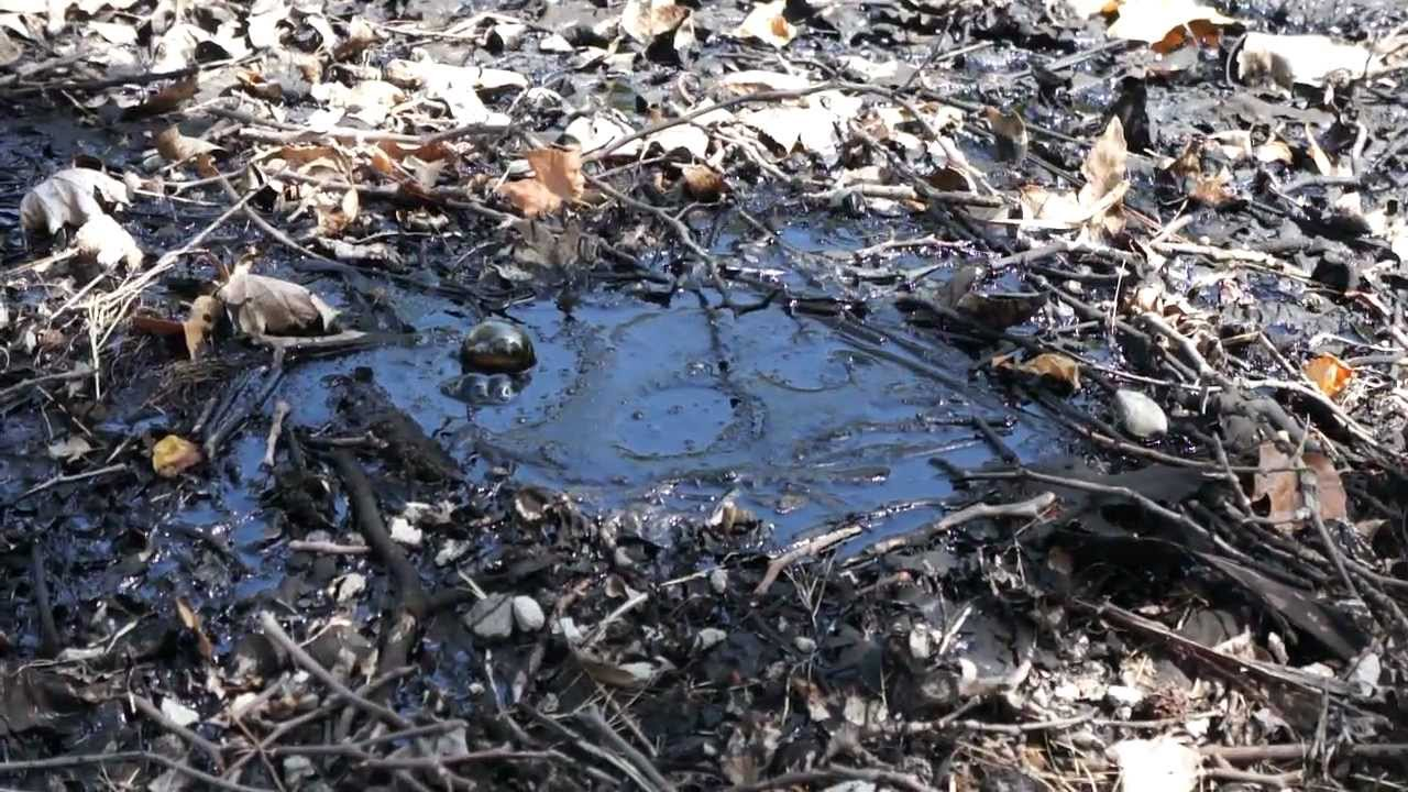 Bubbling Tar at La Brea Tar Pits - YouTube