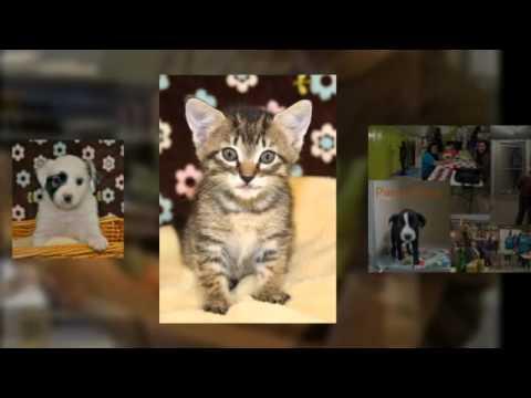 San Antonio Pets Alive! 1 Year Anniversary