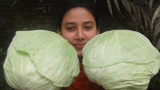 Village Foods | Cabbage Rolls Recipe | Easy Cooking By Street Village Food