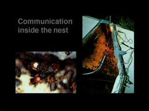 Science Matters: Communication in Bees