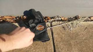 Interviews With Nature #3 - The Forgotten Glove